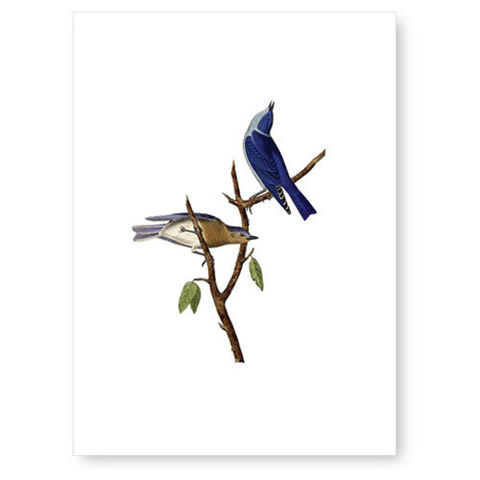 Blue,Birds,Greeting,Card,greeting card, tokyo milk
