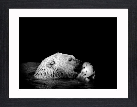 Wildlife,-,13,Picture, Photo, Photograph, Print, Framed Photograph,  Icon, Polar Bear, Arctic Circle, maritime bear
