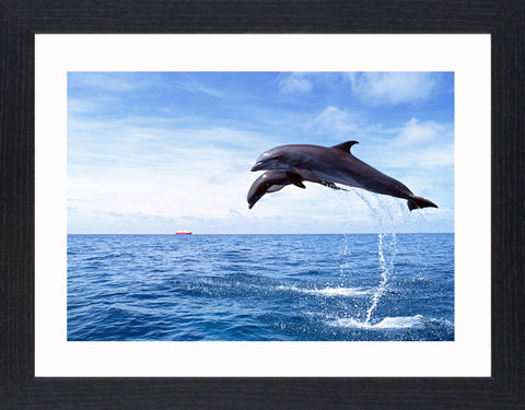 Wildlife,-,17,Picture, Photo, Photograph, Print, Framed Photograph,  Icon, Dolphins, Dolphin, marine mammals, whales, porpoises