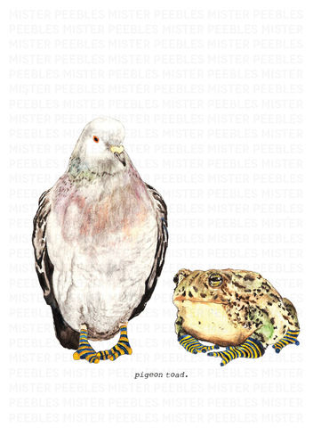 Pigeon,Toad,Print,by,Mr,Peebles,Pigeon Toad Print by Mr Peebles