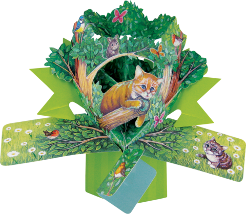 Second,Nature,Pop,Ups,-,Cat,Second Nature Pop Ups, Original Pop-ups, Pop up greeting card, Pop up, Pop-up, Pop-ups, Cat, Animal