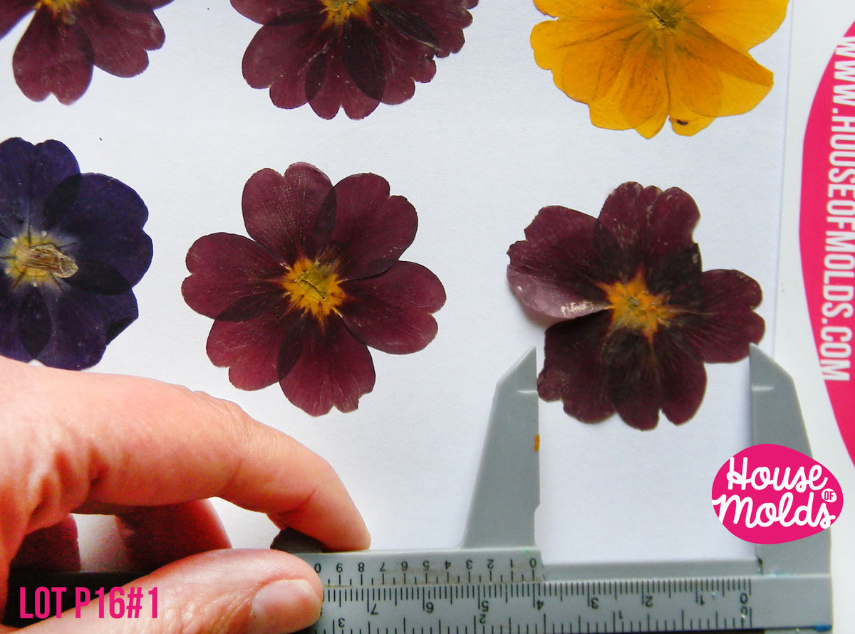 How to scrapbook pressed flowers -  Real Dryed Pressed Flower Set Of 6 Big Size Approx 4 Cm 1 6