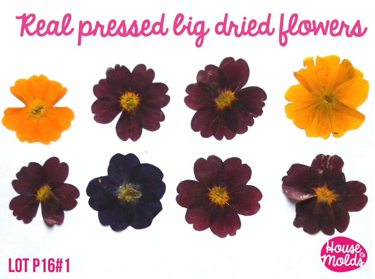 How to scrapbook dried flowers - Real Dryed Pressed Flower Set Of 6 Big Size Approx 4 Cm 1 6 3 Colours Burgundry Purple And Yellow Ideal For Resin Inclusions Scrapbooking Home