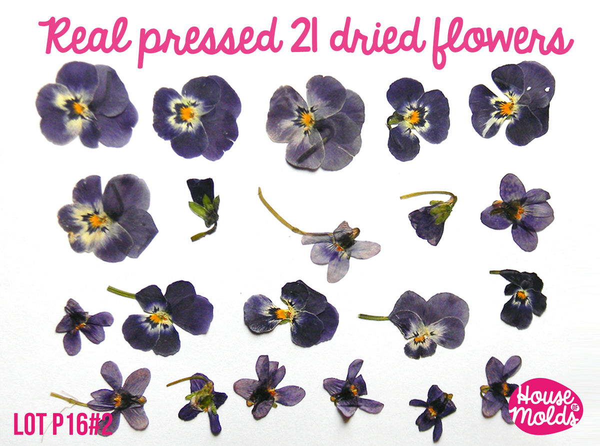 How to scrapbook dried flowers - Real Dryed Pressed Flower Set Of 21 Wild Purple Shaded Viola Ideal For Pendant Resin Inclusions Scrapbooking Home Decoration Art Projects