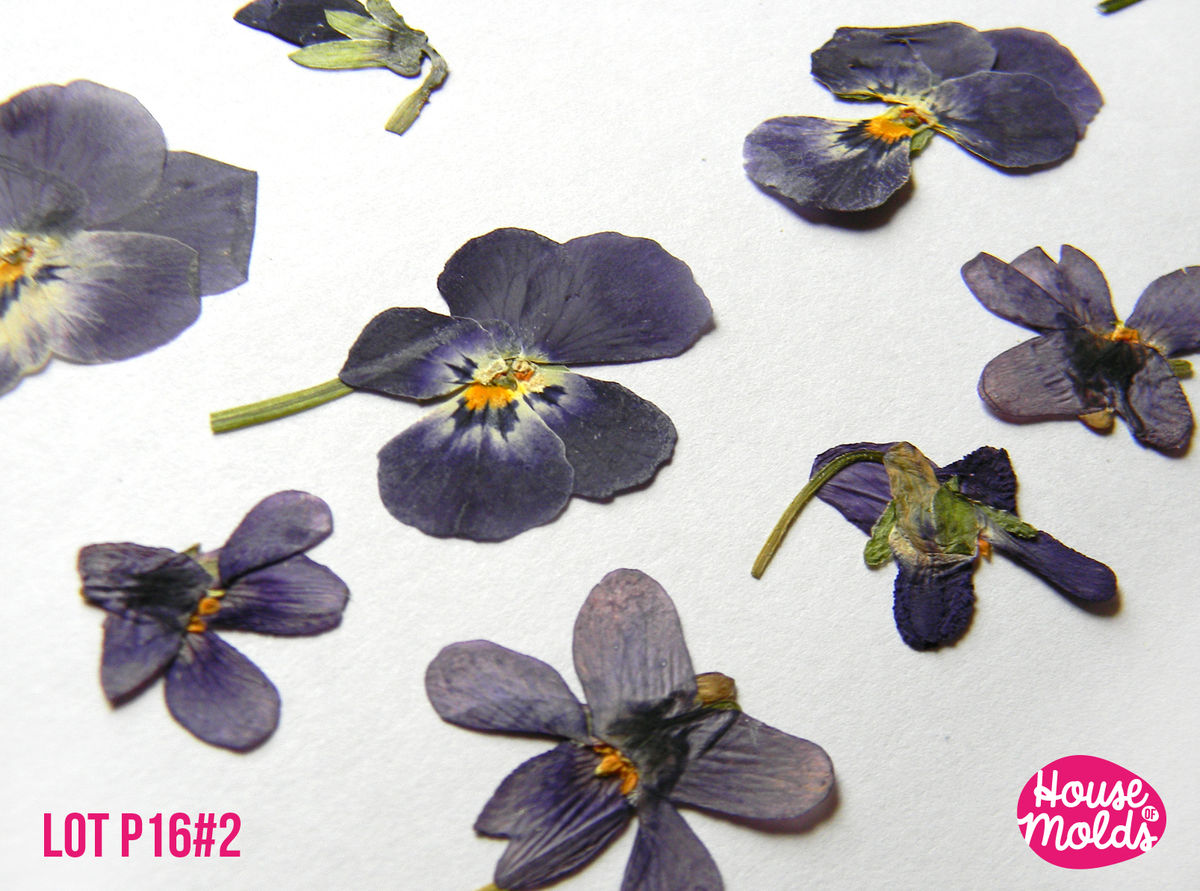 Real Dryed pressed Flower-set of 21 wild purple shaded Viola ,ideal for pendant resin inclusions ,scrapbooking,home decoration art projects  - product images  of