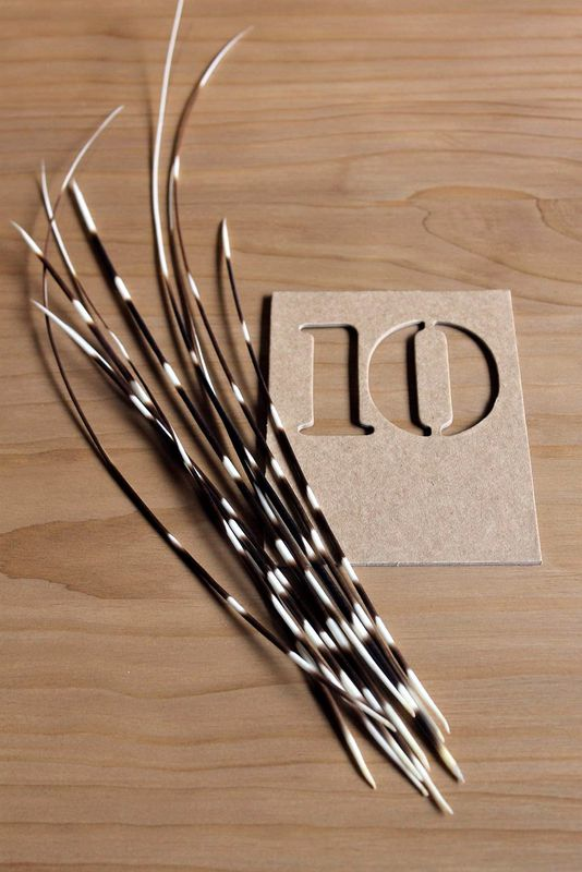Porcupine quills - product images  of