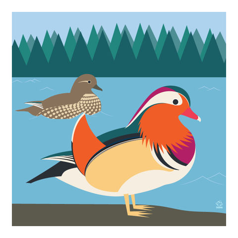 Mandarin,Ducks,10x10,Giclee,Print,nature,Design,Birds,mandarin,wood duck,duck,waterfowl
