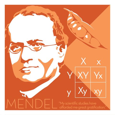 Gregor,Mendel,-,Eureka,Giclee,print,giclee, print, science, einstein, albert einstein, relativity, e=mc2, vector art