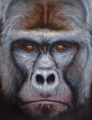 Gorilla,Beringei,-,Mountain,Print,Limited,Edition,Giclee Print Limited Edition 36 x24 Full Color 100% cotton rag fine art paper
