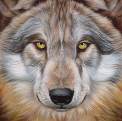 CANIS,LUPUS,-,Gray,Wolf,Print,Limited,Edition,Giclee Print Limited Edition 24 x26 Full Color 100% cotton rag fine art paper