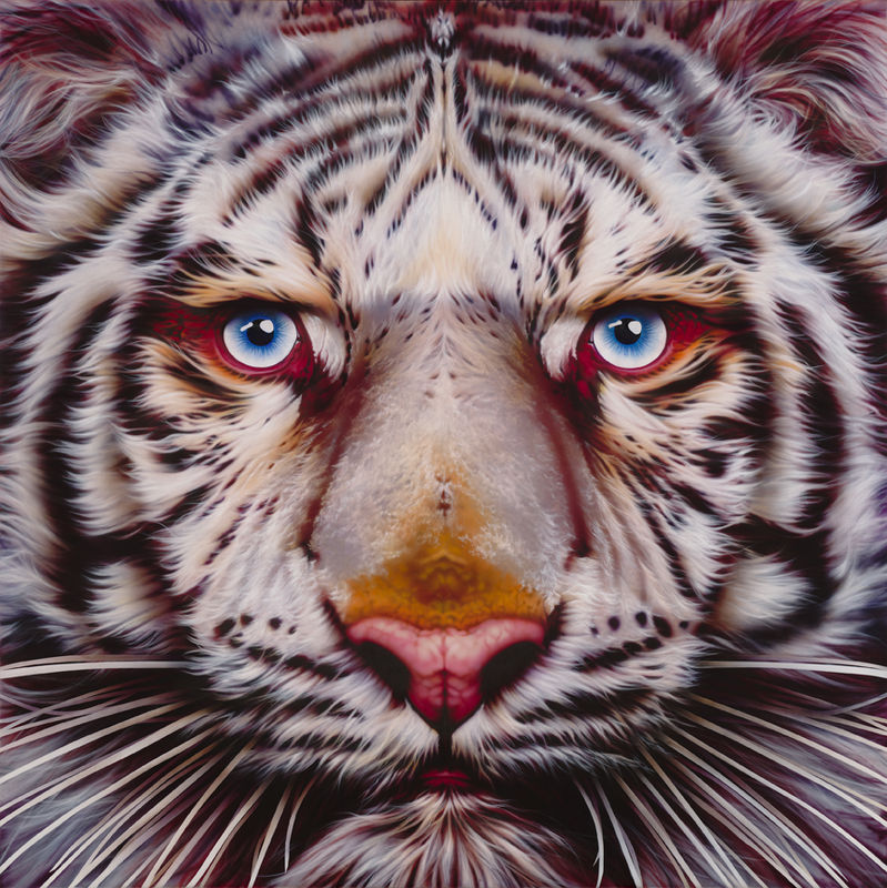 Panthera Tigris - White Tiger - Limited Edition Print - product images  of