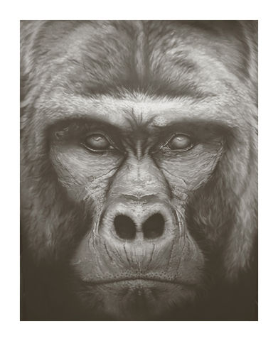Gorilla,Beringei,-,Mountain,Vintage,Edition,Print,Giclee, Print, Black Rhino, Rhino, Airbrush, Art, Limited Edition,Diceros Bicornis