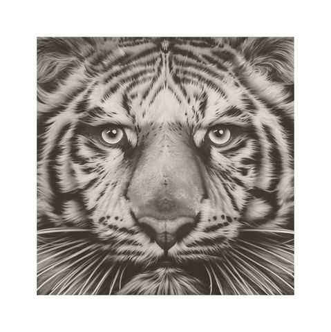 Panthera,Tigris,-,White,Tiger,Vintage,Edition,Print,Giclee, Print, Black Rhino, Rhino, Airbrush, Art, Limited Edition,Diceros Bicornis