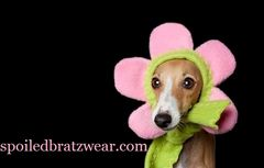 Flower,Dog,Hat,Bloomin,Hatz4Brats,Featured,on,Cute,Overload,photo prop, pet, Costume,dog_flower_hat,cat_hat,cute_dog_hat,original,fleece,no_elastic,italian_greyhound,yorkie,dachshund,spoiled_bratzwear,hatz4brats,cute_overload,halloween_hat,premium fleece