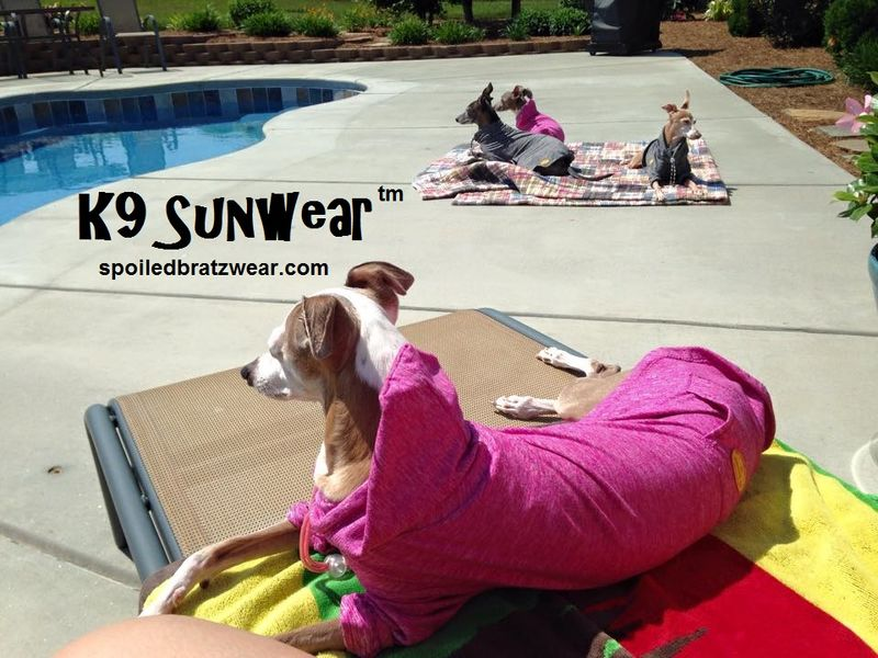 K9 Sunwear™ HOODIE UV Protection for Italian greyhounds and small dogs-hoodie style - product image