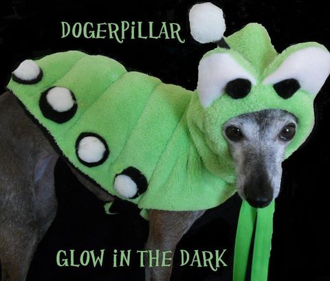 Dogerpillar,Glow,in,the,Dark,Original,Halloween,Costume,for,Dogs-medium,15,Pets,Clothing,dogerpillar,glow_in_the_dark,italian_greyhound,caterpillar,original,spoiled_bratzwear,costume_contest,dog_costume,chihuahua_costume,yorkie,alice_wonderland,pet_costume,best_costume,micro fleece,fleece,glow poms,pipecleaner,velcro,rib