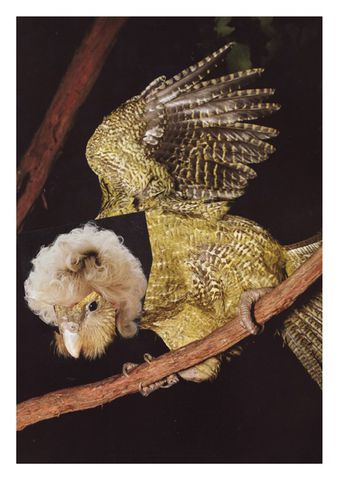 Perm,by,Sophie,Titherington,(part,of,the,Bird,Cuts,series), Titherington, Bird, Hair, Wig, Collage, Design, Magazine, Column, Arts, Agency