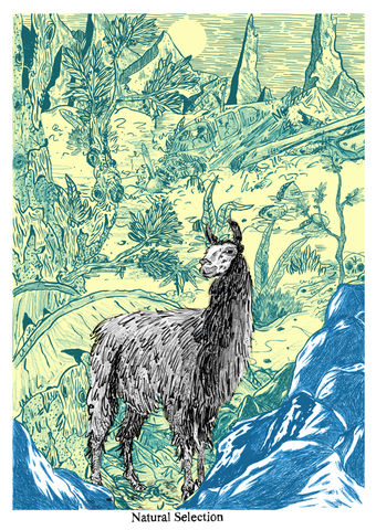 Natural,Selection,by,SAVWO,(A2,Screen,Print),Art, Illustration, Print, Screen, Design, Natural, Selection, Llama , SAVWO, John, Powell, Jones, Column, Arts, Agency, Ink, Paper, Screen Print, Archival