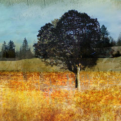 At,Rest,vancouver art, vancouver trees, art on line, fine art, art work, art fine art, fine art artists, landscape art, arts sales