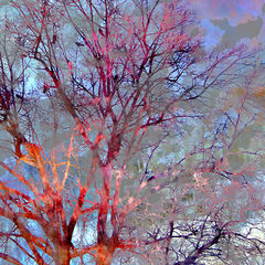 Red,Trees,-,16x20,inches,landscape trees, fine art print, landscape art, impressionism, vancouver artist, whistler art, art on line, fine art, art work, art fine art, fine art artists, arts sales