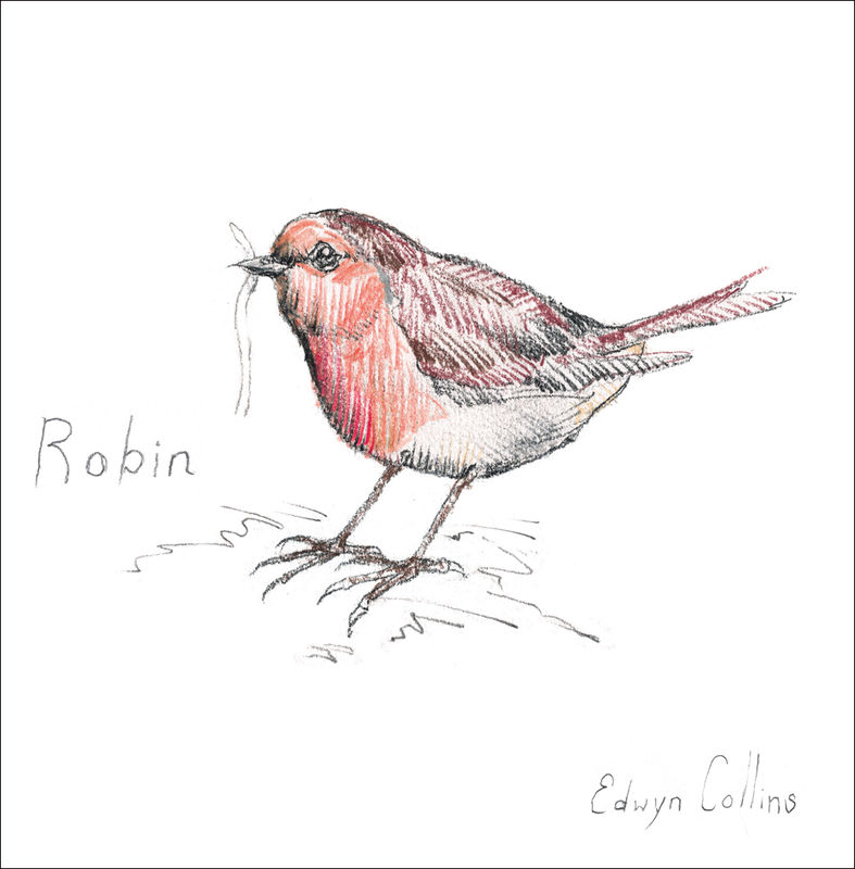 The Snowy Owl and The Robin Cards Mixed Pack - product image