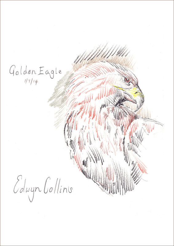 Golden Eagle Giclée by Edwyn Collins - product images