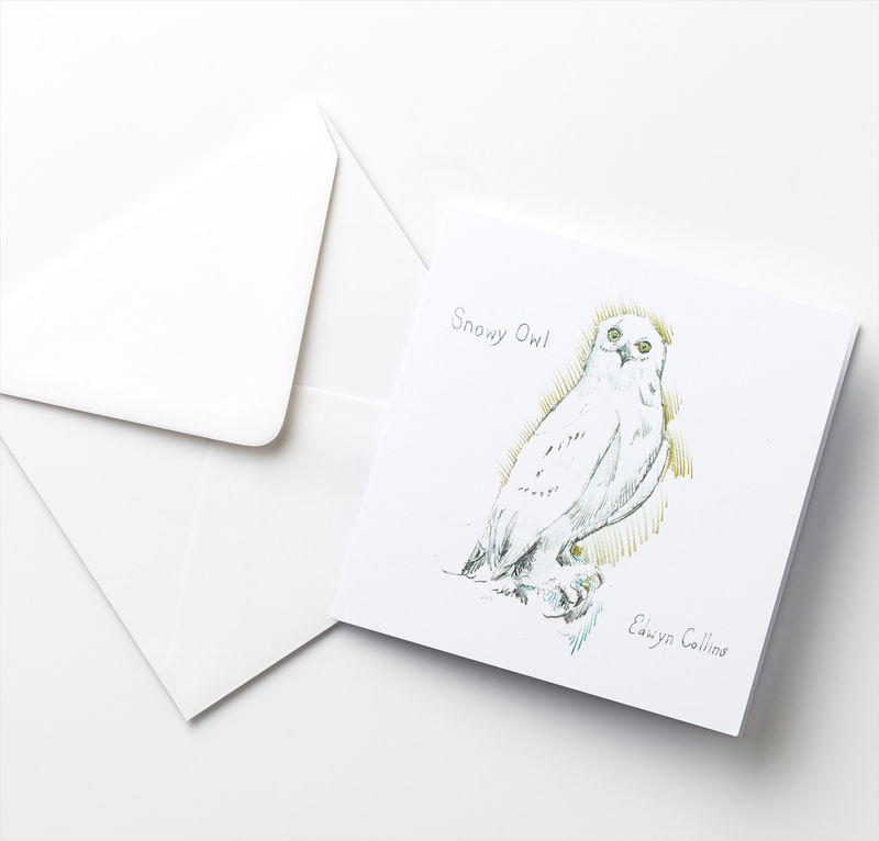The snowy owl and the robin cards mixed pack aed the snowy owl and the robin cards mixed pack product image m4hsunfo