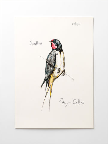 Swallow,A3,Giclée,by,Edwyn,Collins,Edwyn Collins print, Edwyn Collins bird drawing, Swallow print