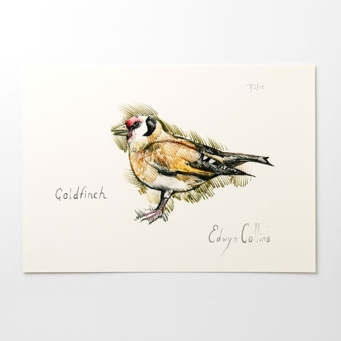 Goldfinch,A3,Giclée,Print,by,Edwyn,Collins,Edwyn Collins print, Edwyn Collins bird drawing, Goldfinch print