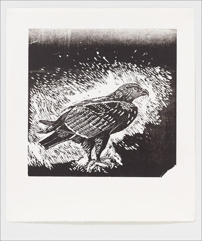 Golden Eagle Letterpress Print from Edwyn Collins Linocut - product images