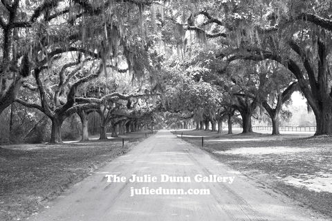 Lowcounty,Live,Oaks,live oak trees, black and white photography, driveway, trees, Charleston
