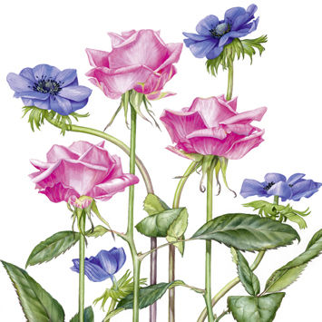 Roses,and,Anemones,Blank,Greetings,Card,buy flower birthday cards online, buy birthday cards with flowers online, buy flower greetings cards online,  buy floral birthday cards, buy female birthday cards online, flower birthday cards for her, anemone birthday card, poppy birthday card, red flowe