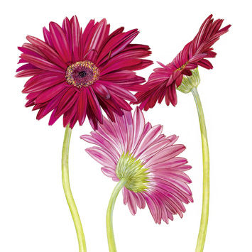 Flowers,Blank,Greetings,Card,buy flower birthday cards online, buy birthday cards with flowers online, buy flower greetings cards online,  buy floral birthday cards, buy female birthday cards online, flower birthday cards for her, anemone birthday card, poppy birthday card, red flowe