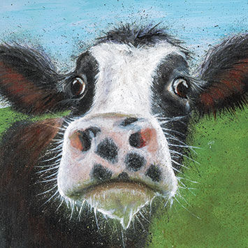 Cow,Close,Up,Blank,Greetings,Card,buy blank greetings cards online with cowss, buy cow cards, cow birthday cards, cow close up card, cow close up, buy animal close up cards online, animal cards, farm animal cards,