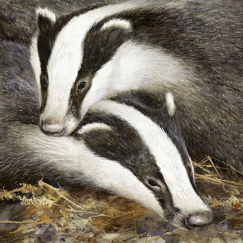 Badgers,Blank,Greetings,Card,buy badger blank greetings cards online, buy badgers cards online, buy cards with badgers, art cards, badger cards, brock the badger cards, buy animal cards online, cards with animals