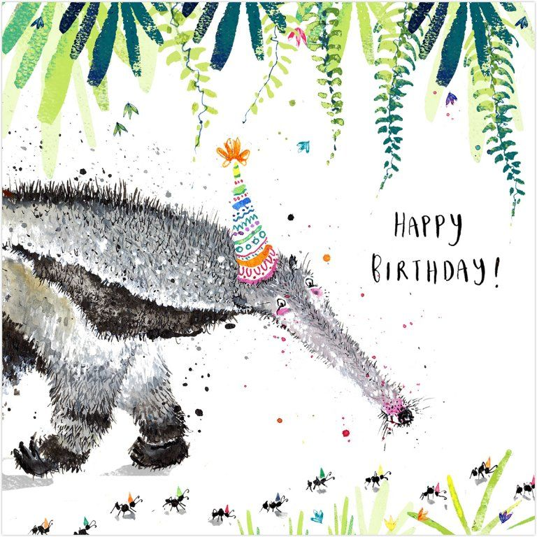 Anteater Happy Birthday Birthday Card Karenza Paperie