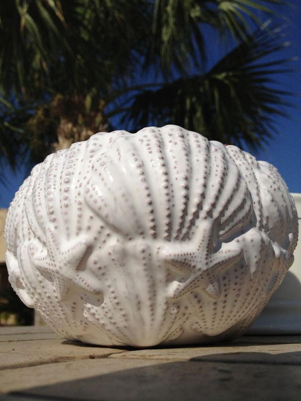 Shell bowl set with scoop - product image