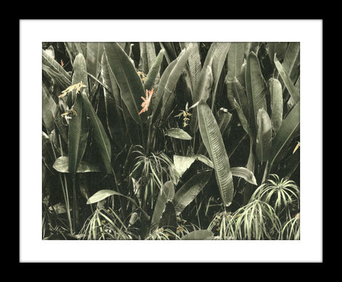 Heliconia,(False,Bird,of,Paradise),hand colored photography,Hand colored photographs, hand colored photography  artists, Hand colored photo, Hand tinted photo, St. Thomas USVI