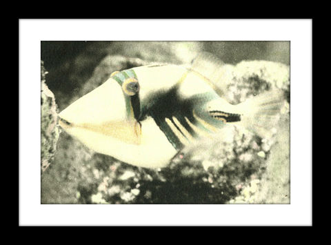 Trigger,hand colored photography,Hand colored photographs, hand colored photography  artists, Hand colored photo, Hand tinted photographs, St. Thomas USVI