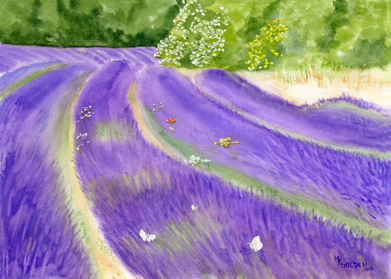 Lavender Field - product images