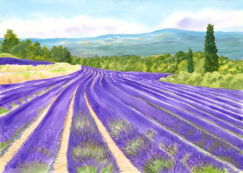 Roussillon,Lavender,Field,giclee print, Lavender field, Roussillon, lavender and green, watercolor, Provencal decor