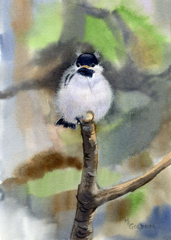 Chickadee,Baby,giclee print, Mary Ellen Golden, watercolor, bird art