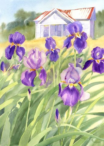 Faded,Elegance,White,Farmhouse,with,Purple,Iris,giclee,print,Art,Print,Giclee,old_house,iris,giclee_print,purple,watercolor,online_art_gallery,flower_painting,purple_flowers,white_house,vertical_print,farm_scene,arches hotpress watercolor paper,inks