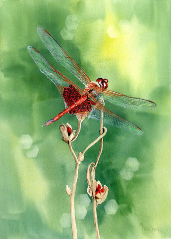 art,giclee,print,Red,Dragonfly,from,original,watercolor,Art,Print,Giclee,dragonfly,red_dragonfly,green_background,seed_pod,wings,flight,nature,Mary_Ellen_Golden,bokeh,abstract_background,golden_gallery,watercolor_painting,ink,watercolor paper