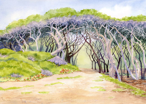 Canopy,of,Weathered,Trees,at,Fort,Fisher,giclee,Coastal beach decor, Art,Print,Giclee,Beach_painting,windswept_trees,Seashore,gaillardia,sandy_path,green,lavender,watercolor,oak_trees,branches,online_art,inks