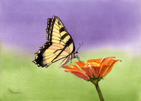 Perfect,Harmony,tiger,swallowtail,butterfly,Art,Print,Giclee,paper,swallowtail butterfly,flowers,watercolor,purple,orange,green,wweteam,ink