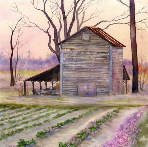 Rose,Hill,Barn,in,winter,twilight.,Art,Print,Giclee,watercolor_painting,giclee_print,mary_ellen_golden,tobacco_barn,tin_roof,rusty_tin,organic_farm,pink,purple,southern_landscape,green_rows,inks,paper