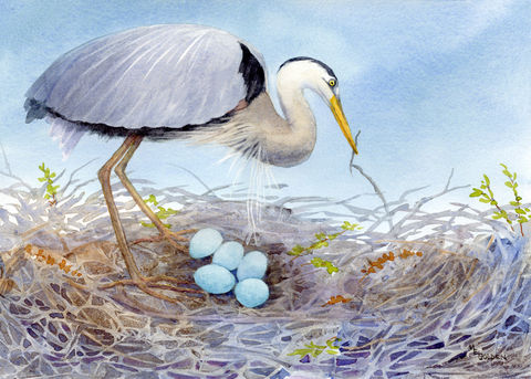 Mother's,Love,Great,Blue,Heron,and,5,eggs,Art,Print,Giclee,Great_Blue_Heron,nest,blue_eggs,birds,gray,blue,watercolor,bird_nest,twigs,feathers,wings,hatch,bird_print,inks,paper