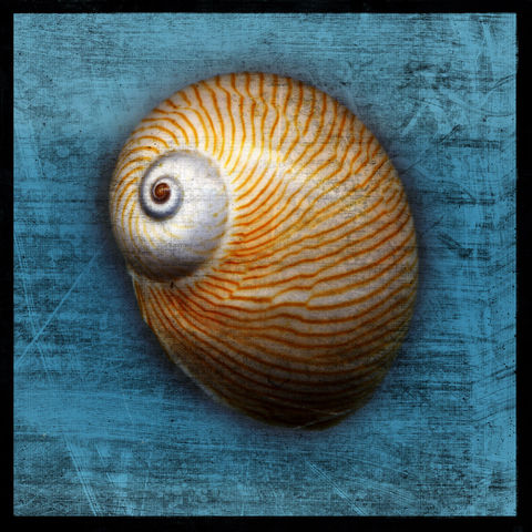 Shark,Eye,No.,2,-,8,in,x,Altered,Photograph,Art,Photography,Digital,surreal,nature,texture,altered,seashell,shark_eye,blue,paper,ink