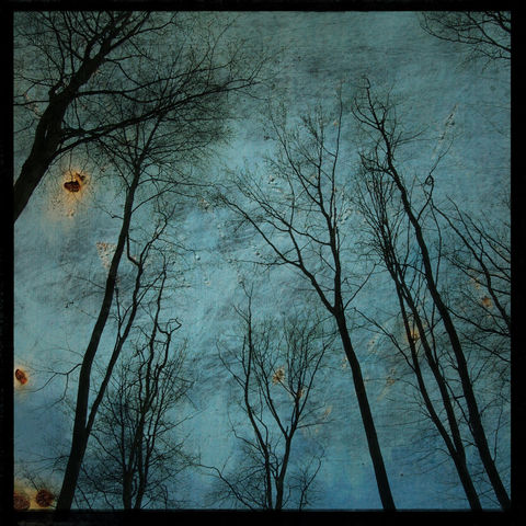 Alsace,Trees,No.,2,-,8,in,x,Altered,Photograph,Art,Photography,Nature,surreal,digital,trees,texture,moody,blue,france,europe,paper,ink